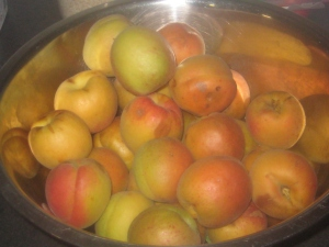 Over hanging Apricots