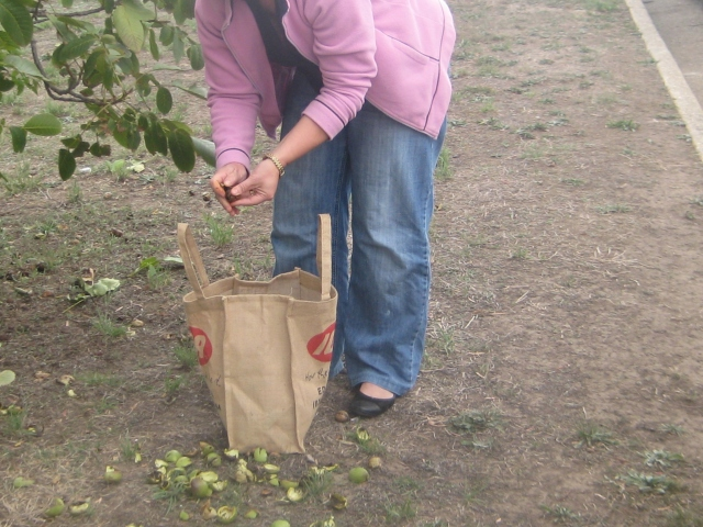 the harvest under way