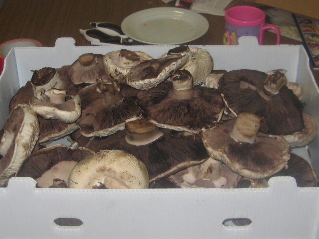 Boxful of Mushrooms