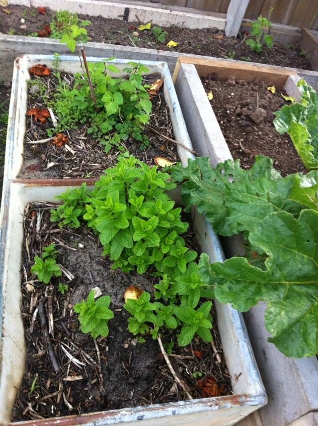 Mint, Raspberries and Rhubarb