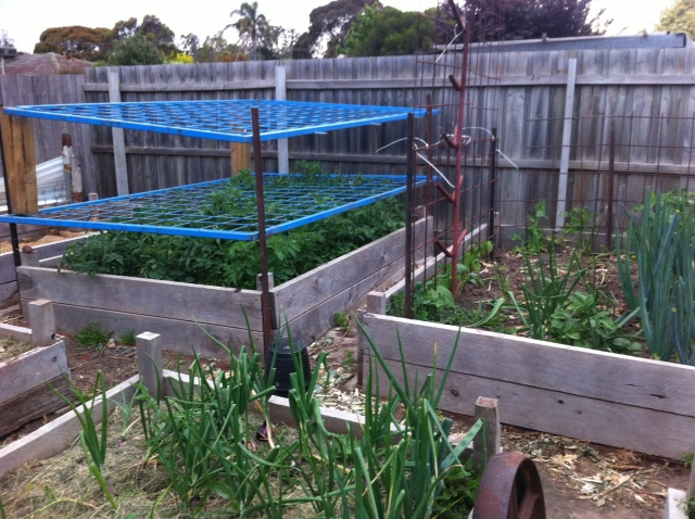 Tomato frame and beans using Reo